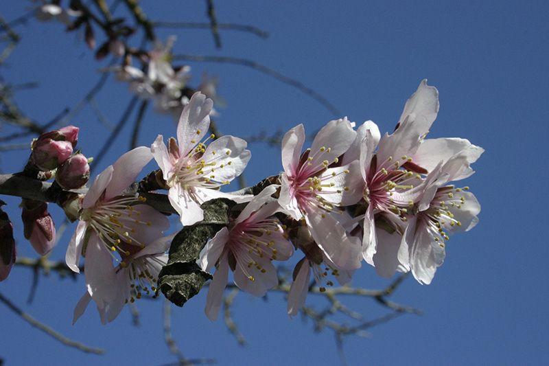 Spring Blossom Alhama De Granada Spring Granada