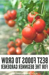 Gartenarbeit für Anfänger Gemüsegarten für Anfänger #GartenfrAnfnger #Anfng …   – uncategorized