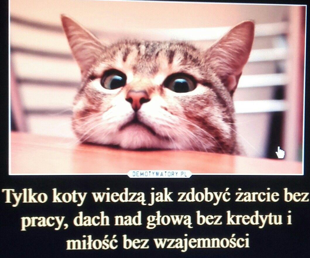 Pin By Reniusia On Slowa Kociaki Koty Zabawne Memy
