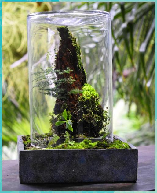 Pin Auf Miniatur Garten Glas