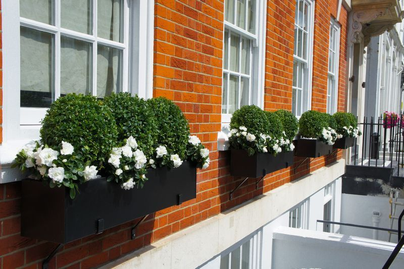 window boxes with miniature evergreen trees   Window boxes ...