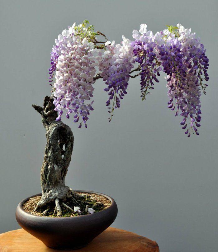 Bonsai Baum Pflege - Sorgen Sie für eine schöne Pflanze | Bonsai ...