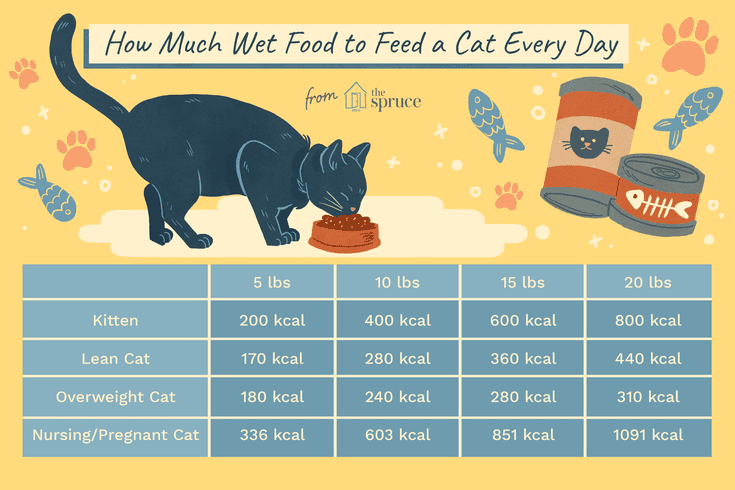 Because My Cat Is Obese And My Kitten Is Hangry All The Time I M Too Into Macros And Nutrition To Not Figur Cat Feeding Schedule Best Cat Food Wet Cat Food