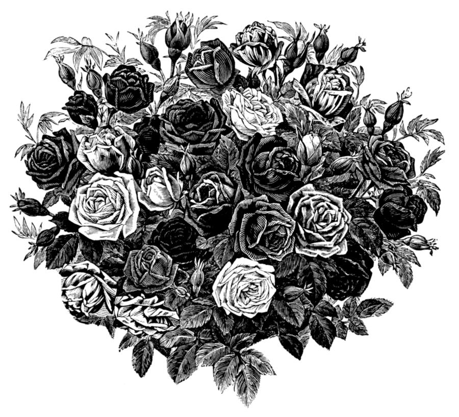 Картинки черно белые цветы розы