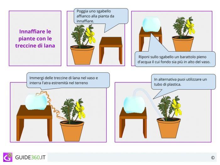 Come annaffiare le piante quando si è in vacanza   Fai da ...