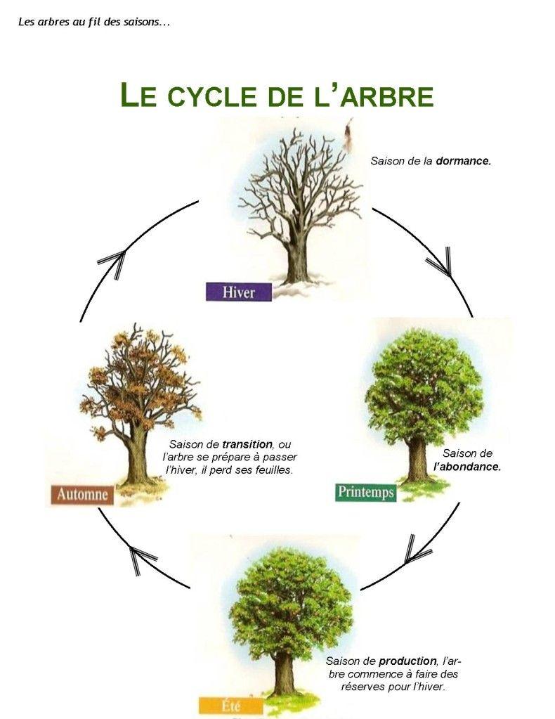 1 le cycle del arbre | természetvédelem/ecology | pinterest | forest