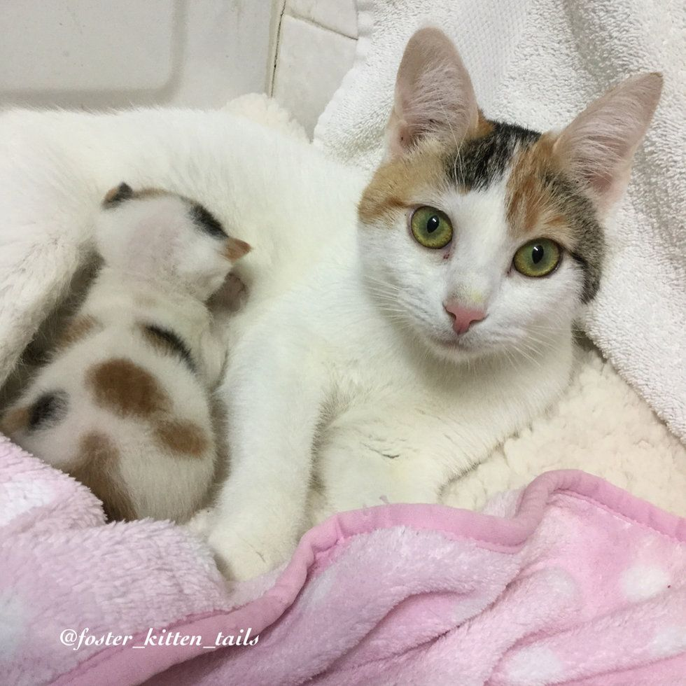 Cat Mom Rescued Along With Her Surviving Kitten She Wouldn T Let Her Go Cat Mom Pregnant Cat Baby Kittens