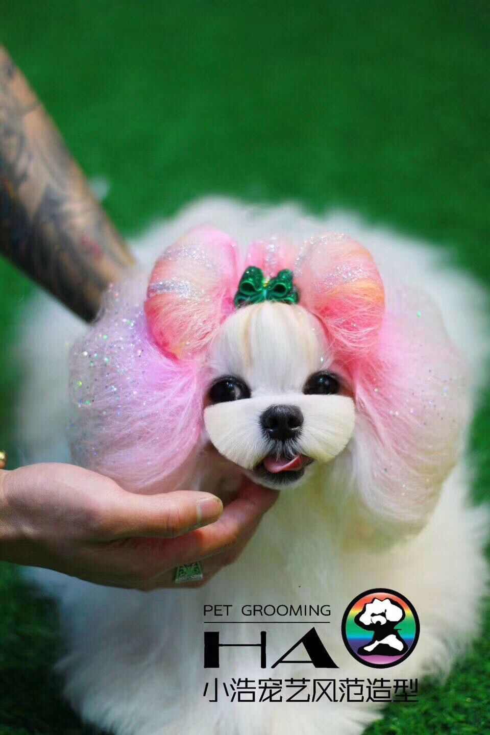 What A Day With This Adorable Grooming Work Done By Hao Pet