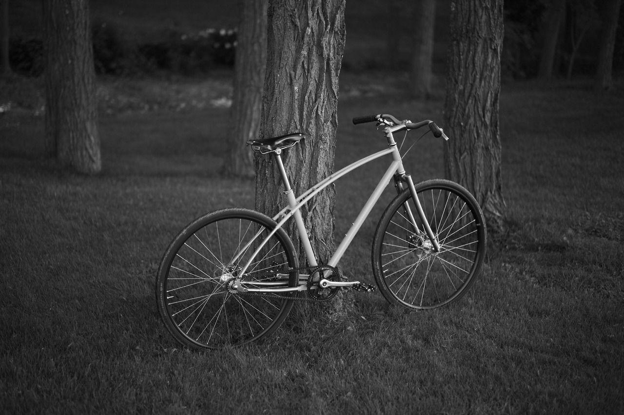 Budnitz Bicycles No 1 Titanium Bicycle City Bike City Bicycles