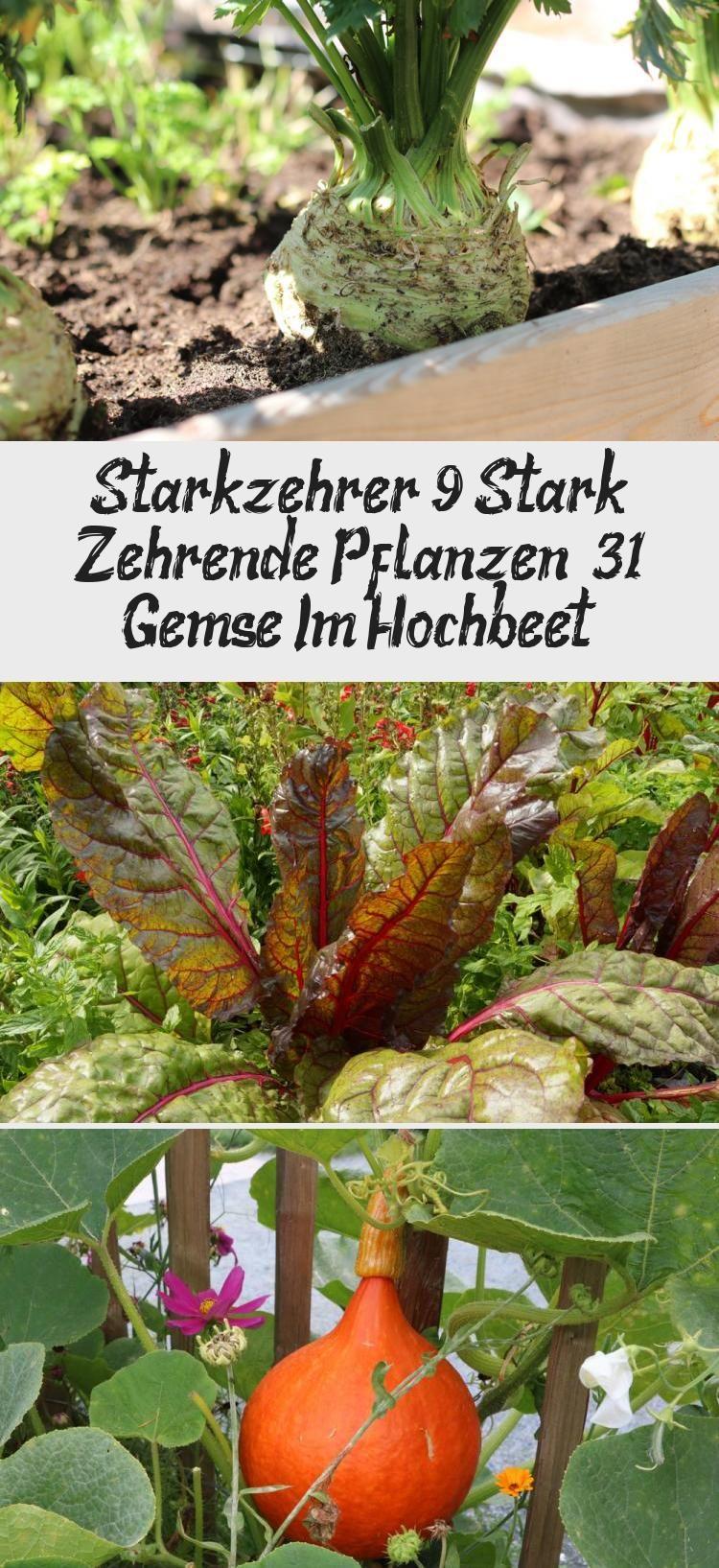 Fruchtfolge Planen Im Gemusegarten Starkzehrer Mittelzehrer Schwachzehrer Wurzelwerk Fruchtfolge Starkzehrer Gemuse Pflanzen
