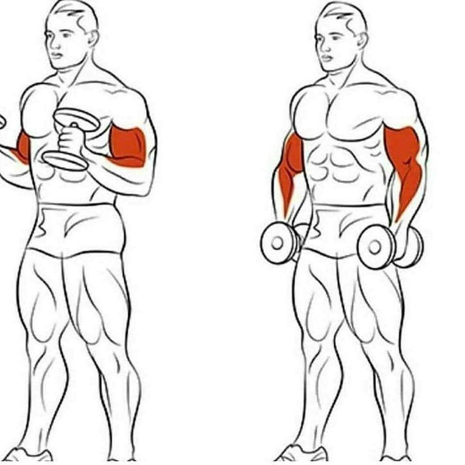 Упражнение для мышц рук в картинках