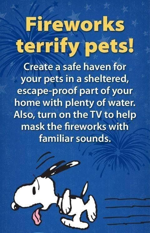 create a safe haven for your pets in a sheltered, escape proof part of your home with plenty of water
