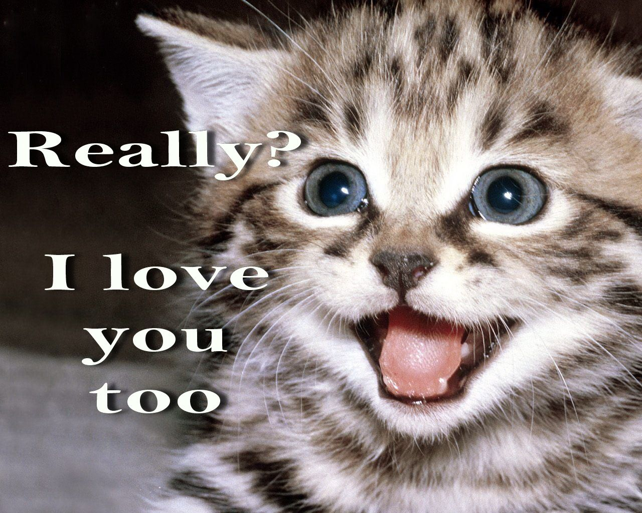 I love you more kitten