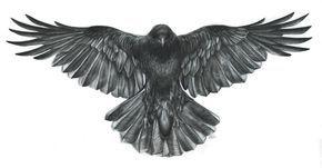 Crow_scan_sml.jpg (JPEG-afbeelding, 2210 × 1157 pixels)