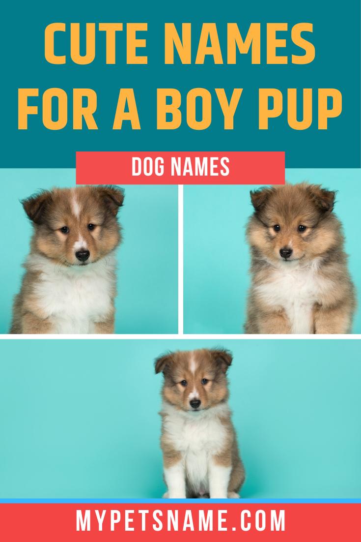 Boy Cute Dog Names In 2020 Cute Names For Dogs Cute Dog Names Boy Dog Names