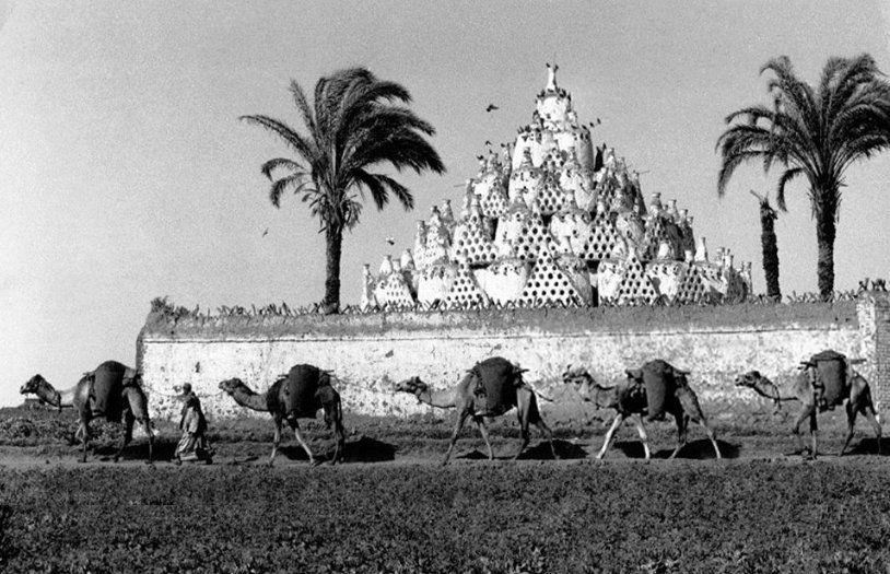 صورة نادرة للريف المصري ويظهر فيها أبراج الحمام ومجموعة من الجمال تعبر أحد الحقول تم التقاط الصورة عام 1930 Old Egypt Egyptian History Old Pictures