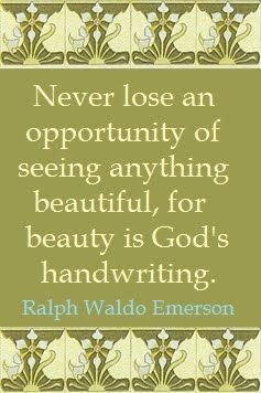 """love this quote """"never lose an opportunity of seeing"""