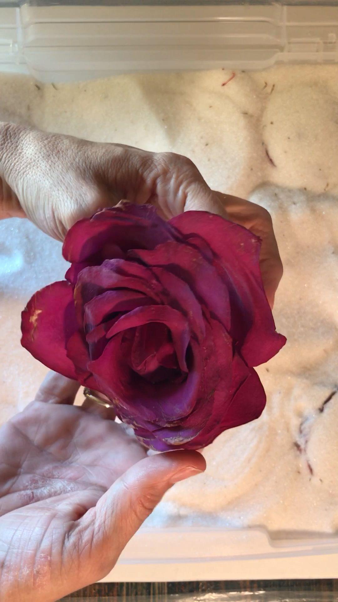 #flowers  #driedflowers  #roses #flowerpreservation