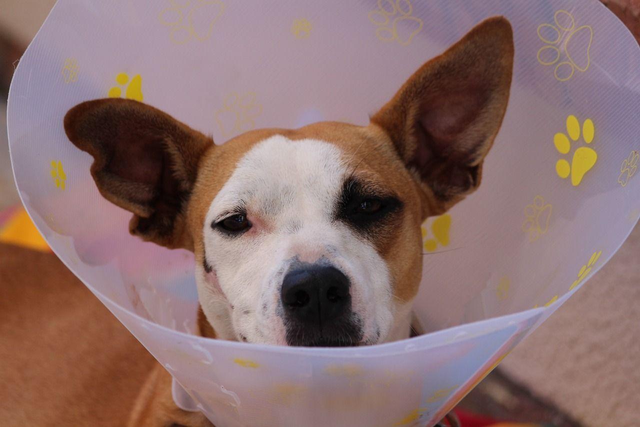 Find Emergency 24 Hour Vets In Spain With This App Perros Cuidado Con El Perro Productos Para Mascotas
