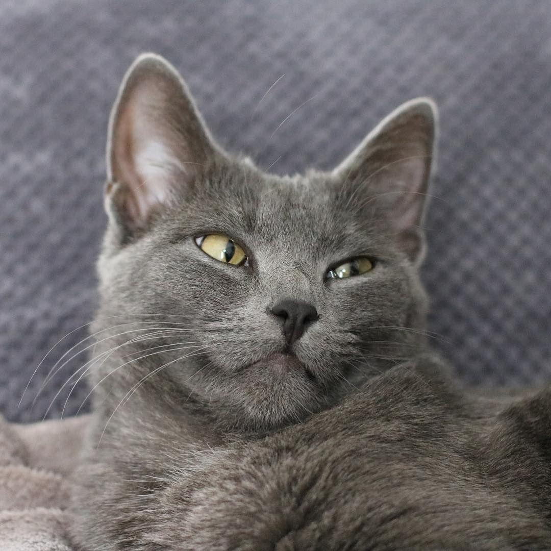 Fridayyyy ! C'est la grande forme pour tout le monde à la maison  #bbfauve #cat #catsofinstagram #catsofworld #love #cute #fauvetiboudnez