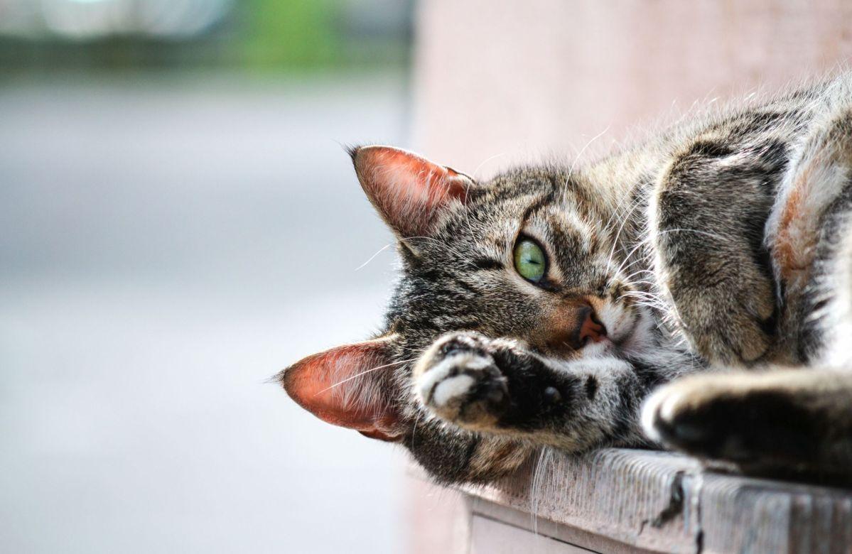 Happy TRT Tummy Rub Tuesday (Week 150 Cat sneezing