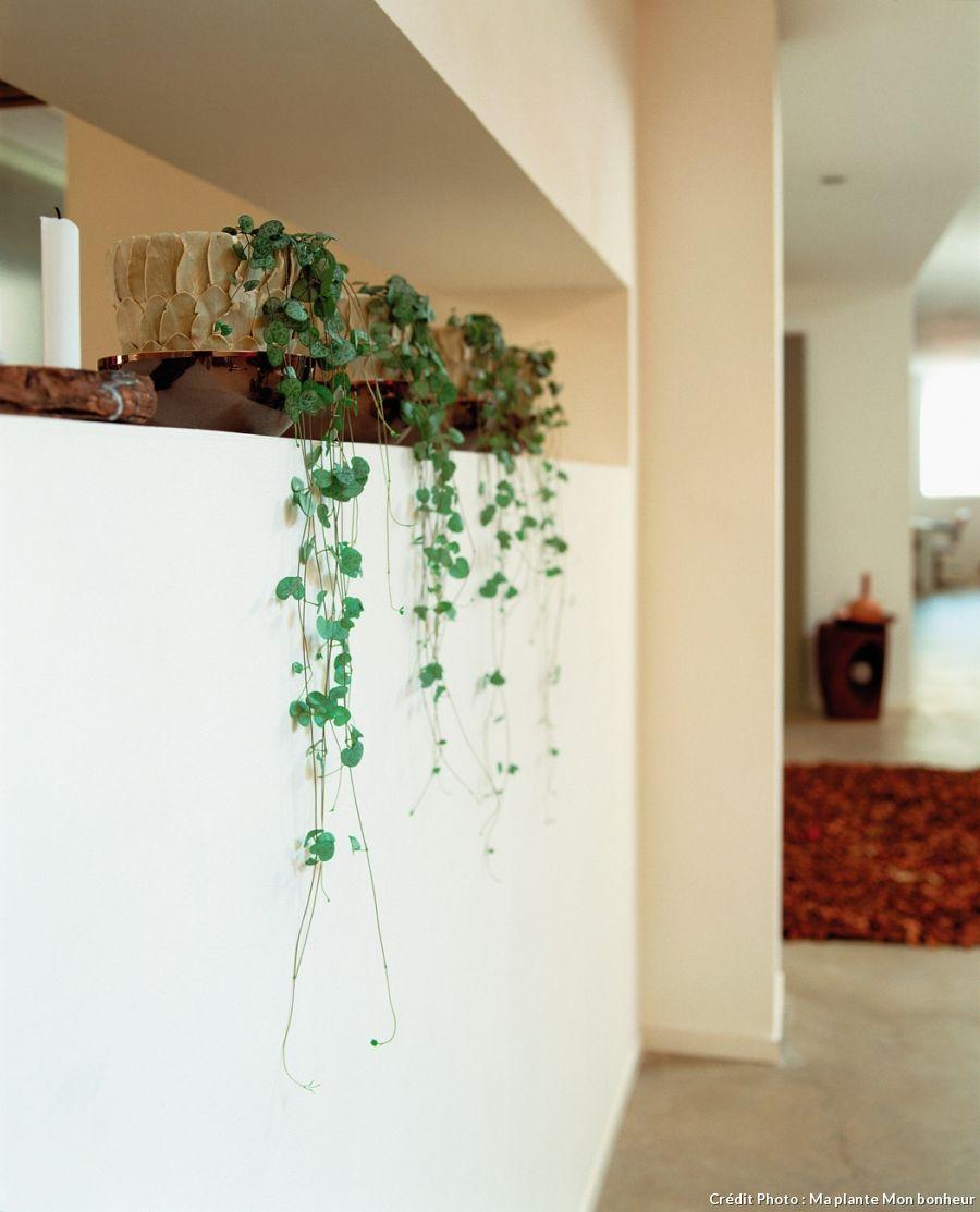 ceropegia comment cultiver la cha ne des c urs en int rieur pinterest pots plantes et. Black Bedroom Furniture Sets. Home Design Ideas