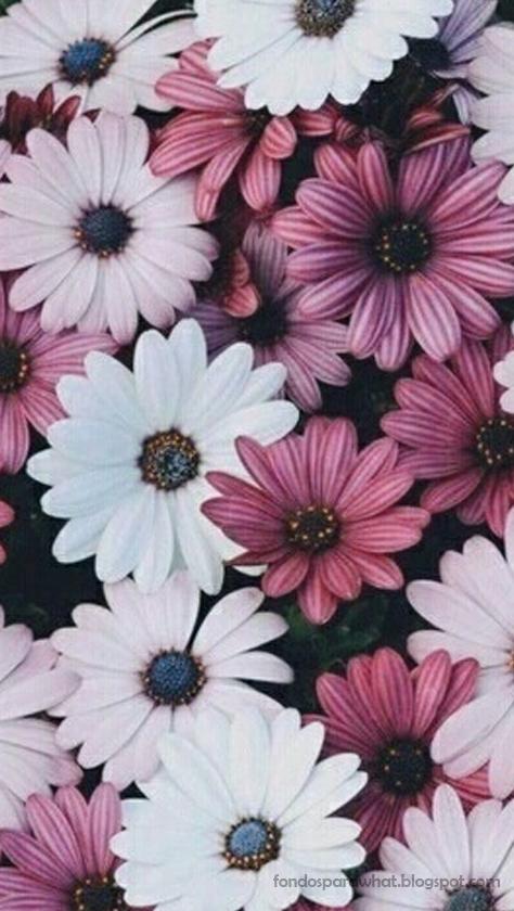 Vintage Pink Daisy Wallpaper