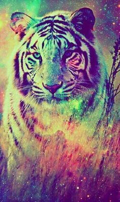 Colorful Tiger Wallpapers