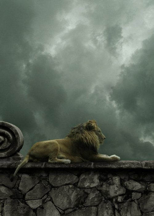 Lion perched on a wall