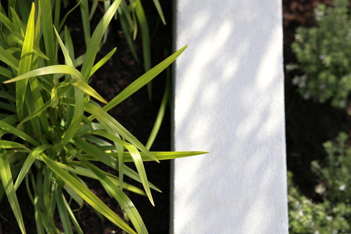 Golden Bay - LD TOTAL | Garden Design | Front Yard | Line | Green | Container Gardens