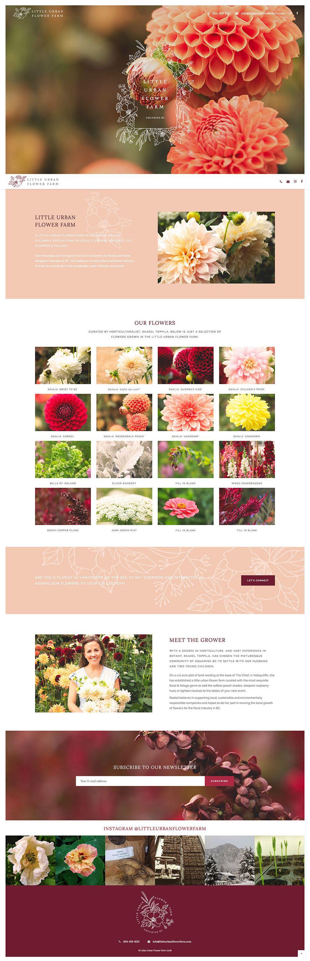 Beautiful Color Palette Web Development Design Web Design Creative Website Design