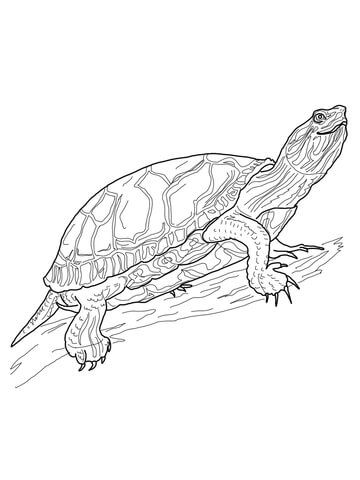 Western Painted Turtle Coloring page | Scouts | Pinterest ...