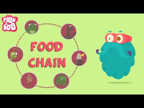 what is a food chain the dr binocs show educational videos for kids youtube