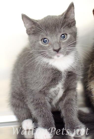 Tatcancats About The Turkish Van Angora Cats Turkish Angora