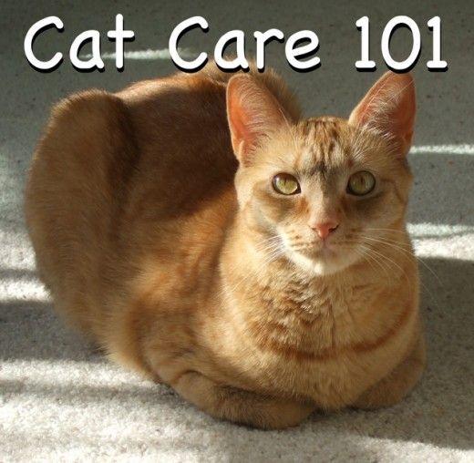 cat deterrent spray for plants