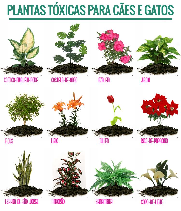 Plantas T Xicas Para C Es E Gatos Gatos Pinterest