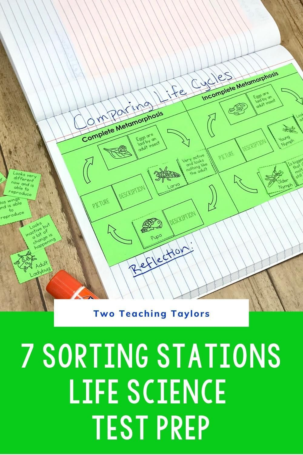 hight resolution of Organisms and Environment Sorting Activities   Upper elementary science