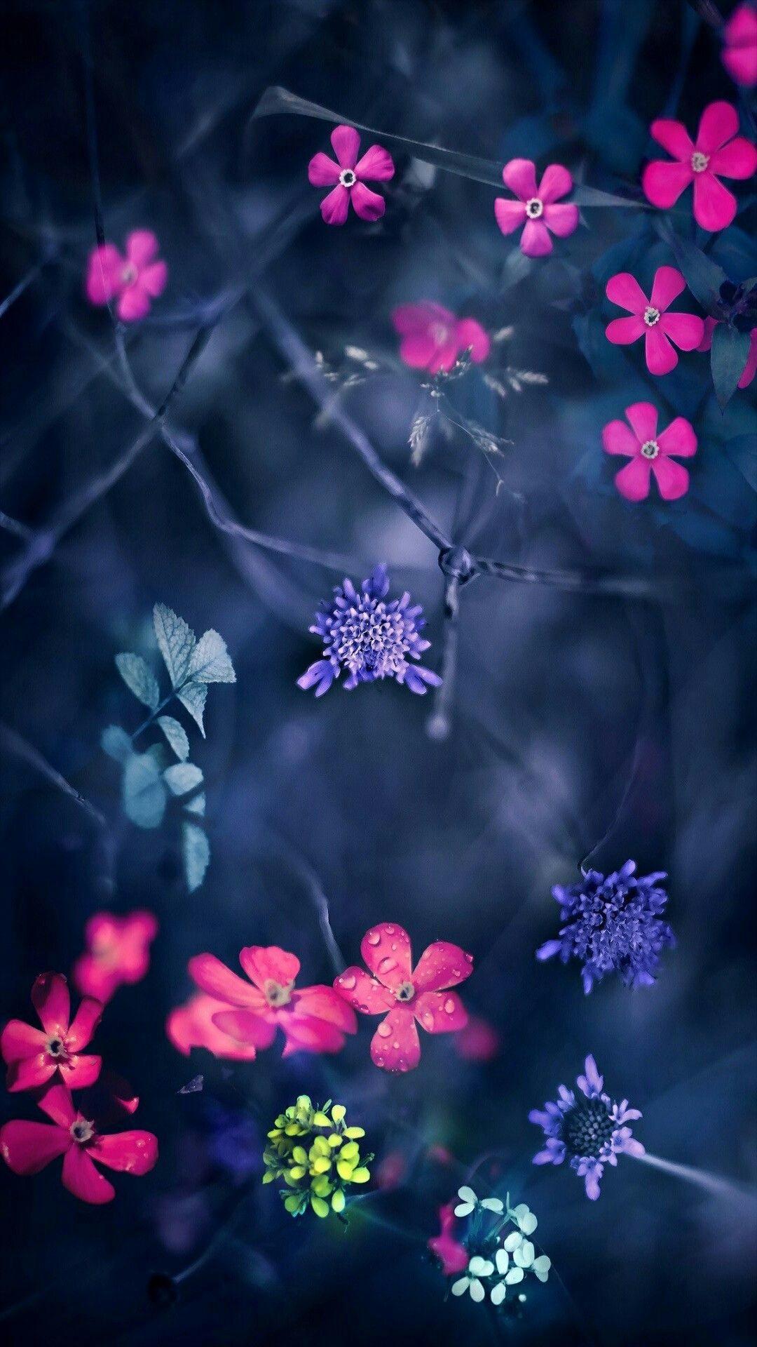 Unduh 64 Wallpaper Bunga Violet Gratis Terbaru