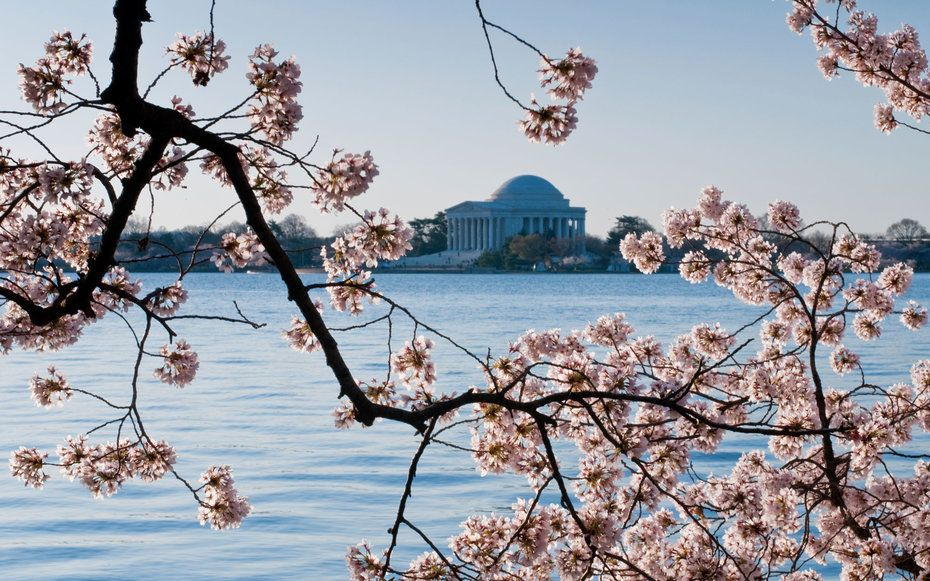 When Do Cherry Blossoms Bloom In Washington D C Cherry Blossom Washington Dc Travel And Leisure Cool Places To Visit