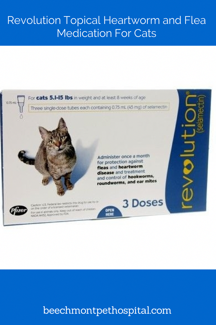 Cats Don T Dance CatsInHats Key 5950175951 Heartworm