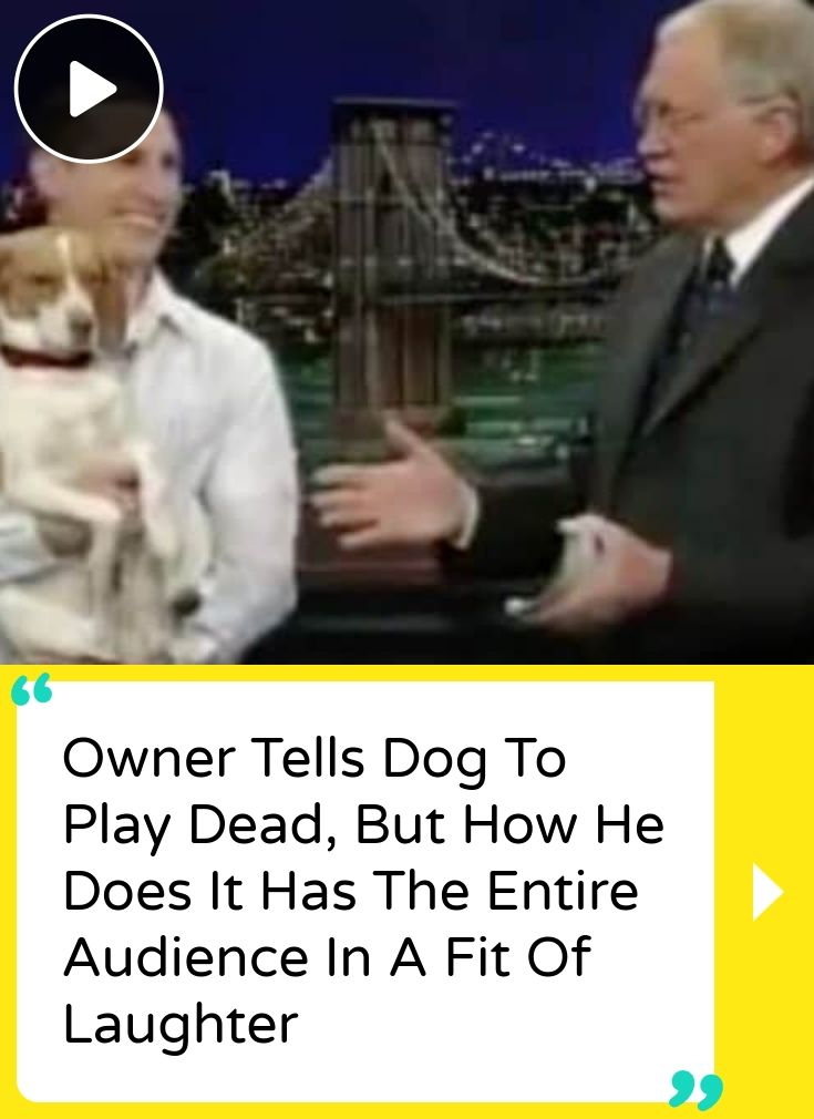 Owner Tells Dog To Play Dead, But How He Does It Has The Entire Audience In A Fit Of Laughter