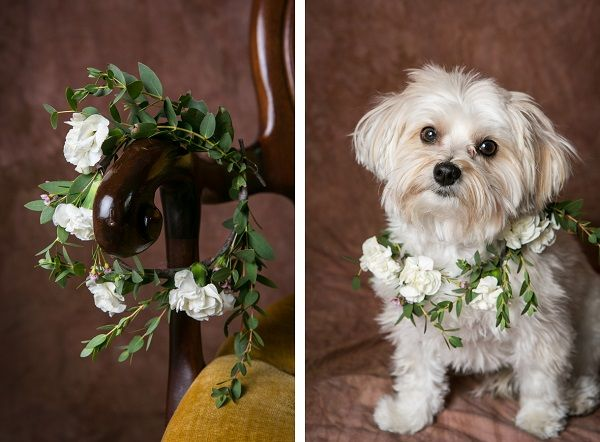 © Kristina Lynn Photography | floral accessories for dogs