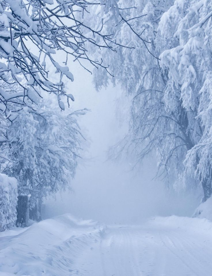 The road to nowhere winter snow white forest tree wood landscape