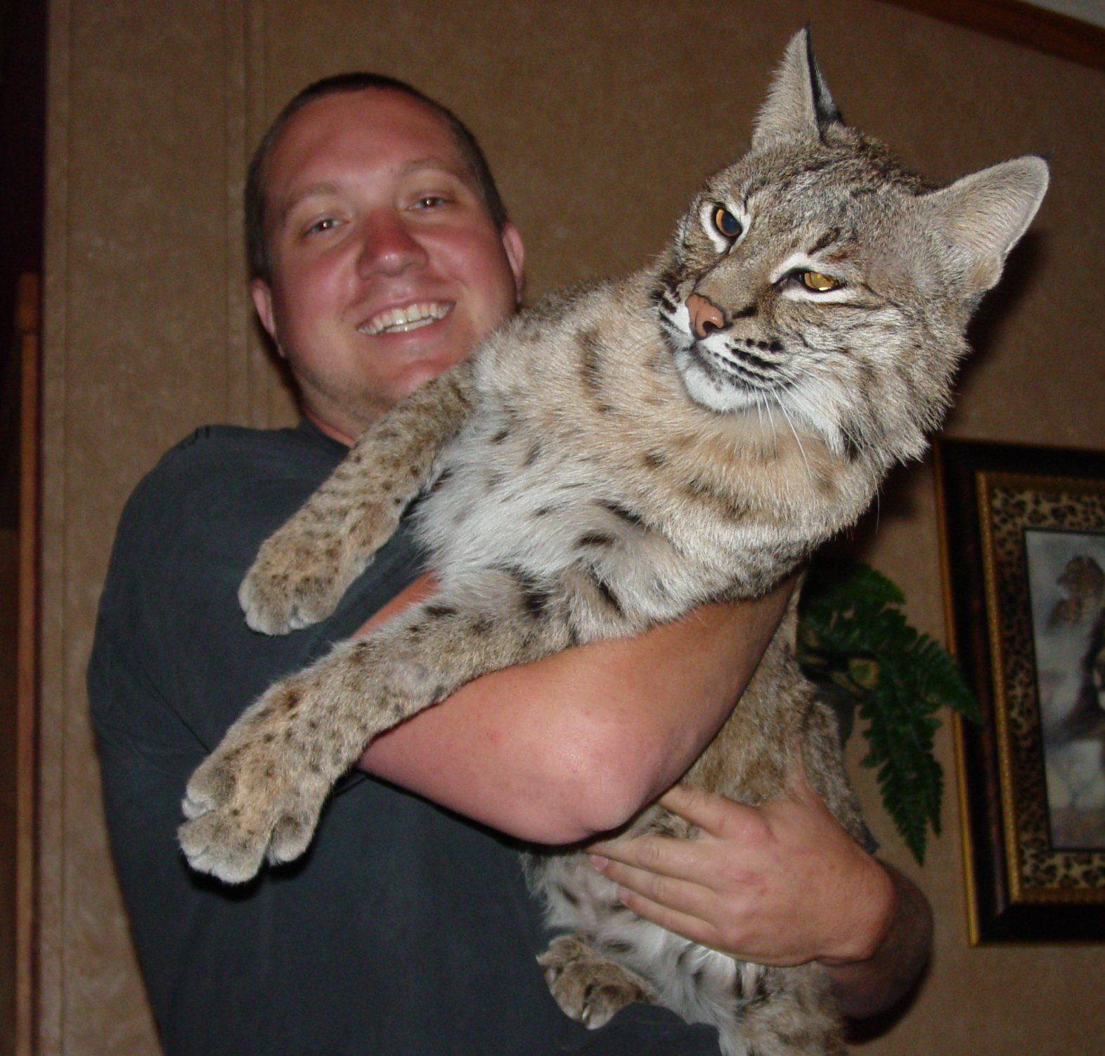 Man in Indiana gets extremely rare footage of a Bobcat in