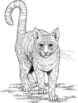 Ocelot Cat Coloring Page Dog Coloring Page Animal Coloring Books