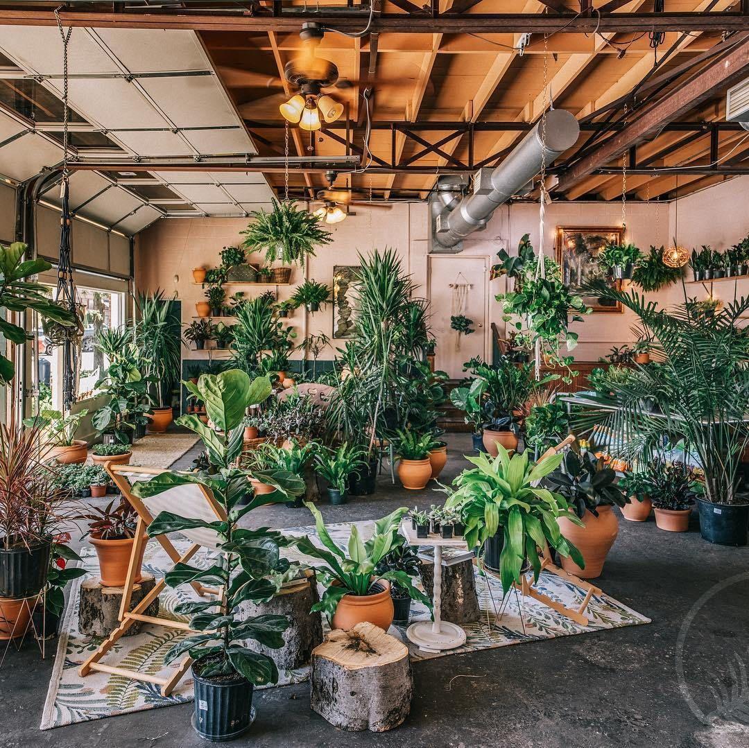 Plant Shop Spotlight OASIS Room with plants, Indoor