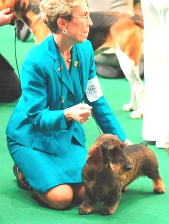Westminster Kennel Club Dog Show 2012 Named Grand Champion