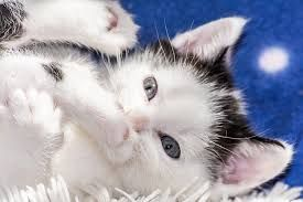 black and white & Cats lover  #Cat #cats #catlover #animals #animal #instakittens #instagram #instacat #catsofinstagram #adorable #catlovers #sweetcat # kittens #kitten #kitty #trendscat #babycat
