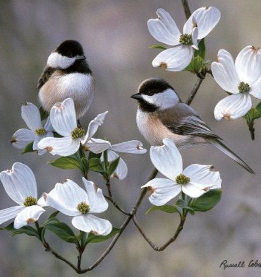 Chickadees and Dogwood Blooms