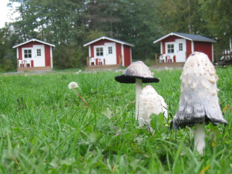 Cabins, 500 kroon